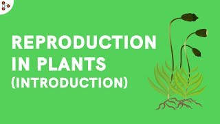 Introduction to Reproduction in Plants CBSE 7