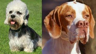Top 10 razas de perros que seguro no conocias