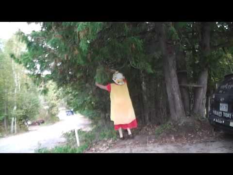 Nancy Today: Tree trimming ASMR