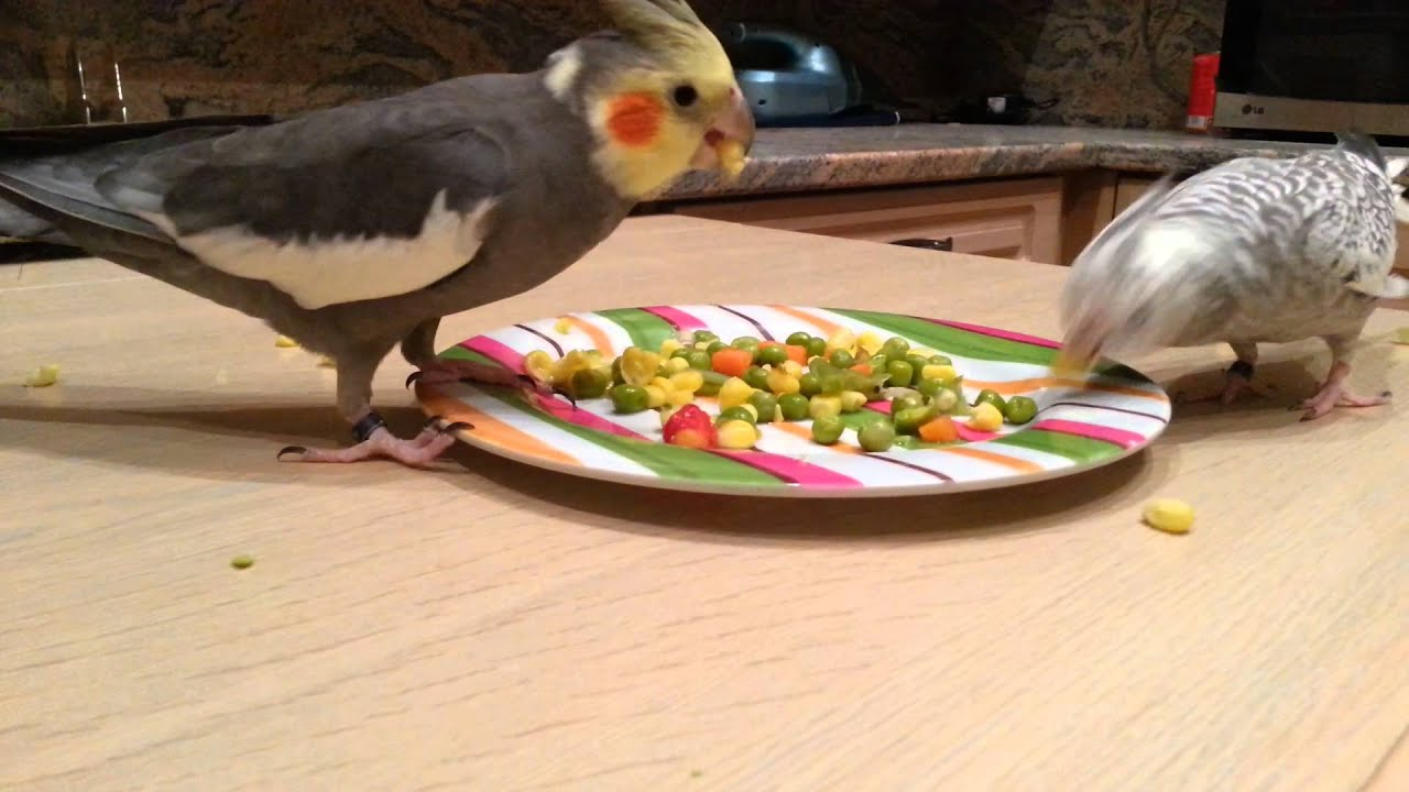What Kind Of Food Do Cockatiels Eat