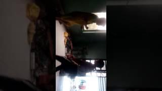 Hai trẻ trâu đánh nhau ngu người