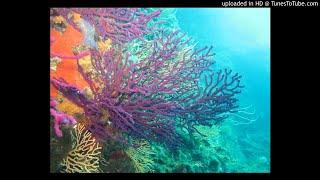 L'océan a des droits- Episode 8 -  Un droit et des Avocats  pour l'Océan !