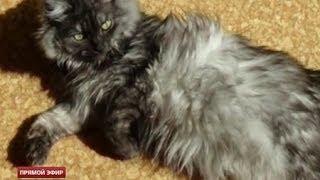 Загадочная болезнь унесла жизни уже 50 екатеринбургских кошек