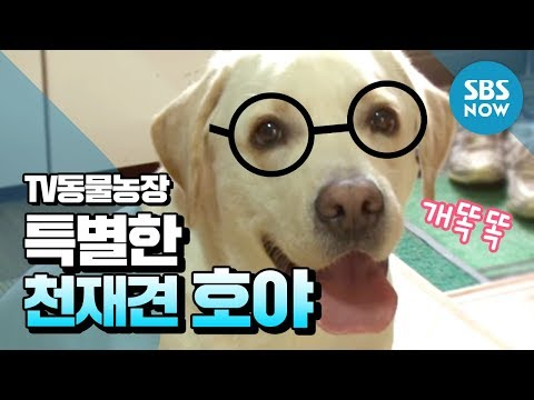 [TV동물농장] 상상 초월 특별한 천재견 호야 /  'Animal farm' Review