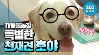 SBS [동물농장] - 상상 초월 특별한 천재견 호야