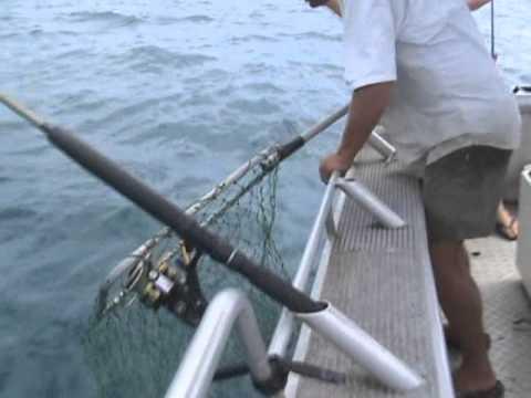 Fishing The Daintree