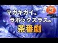 筋トレマガキガイとラボックスラスの茶番劇【海水魚水槽】