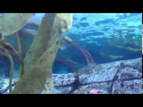 Gulf of California Aquarium