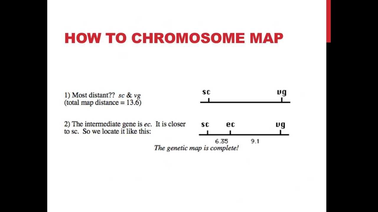 Simple Chromosome Map