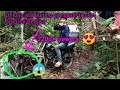 Mikat Burung Cucak Ijo Di Hutan Belantara  Mp3 - Mp4 Download
