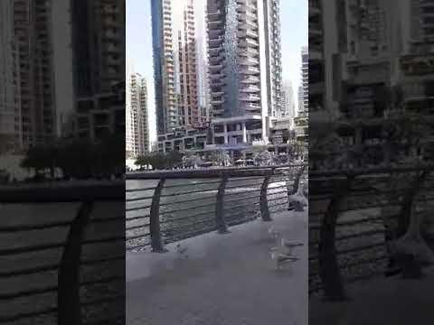 Dubai Marina |amazing view of Yatch and beautiful birds @Zaliana Shout Channel
