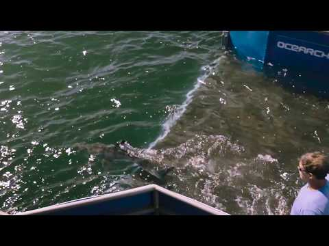 OCEARCH: Expedition Mid-Atlantic Wrap-Up