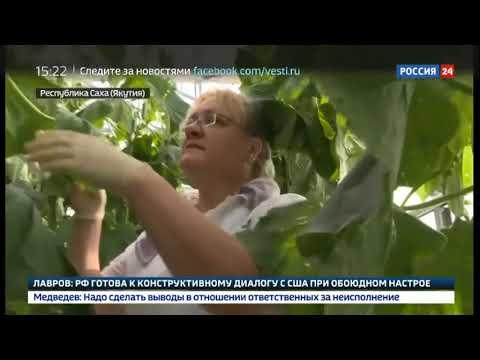 Смотреть фото В Якутии открыли вторую очередь круглогодичных теплиц Саюри   Россия 24 новости Россия