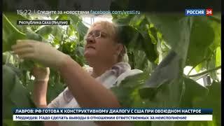 Смотреть видео В Якутии открыли вторую очередь круглогодичных теплиц Саюри   Россия 24 онлайн