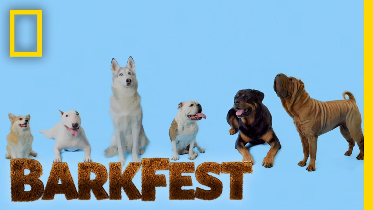 Dogs Of All Sizes Barkfest You