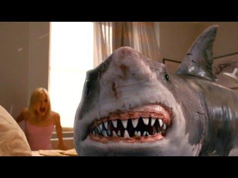 小情侣刚睡醒,一头鲨鱼破窗而入,这是什么骚操作?