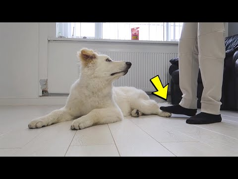 """""""accidentally""""-stepping-on-my-dog's-feet-too-many-times!"""