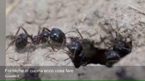 Formiche In Cucina Ecco Cosa Fare Youtube