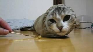 新種発見? 世にもかわいいイモムシ猫と遊ぼう