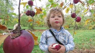 vuclip Apple picking at Green Mountain Orchards in Putney Vermont, USA by Achy Dad