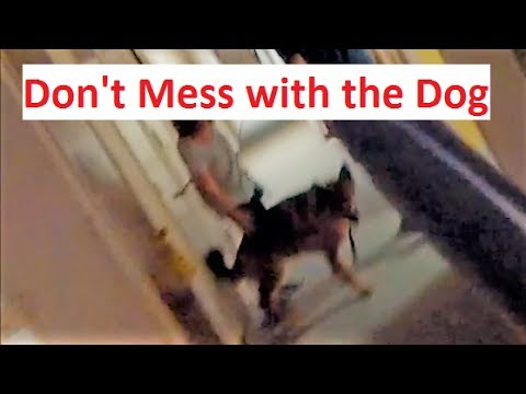 POV Dog Attack (K9-1.com)