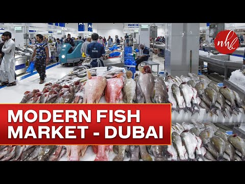 New Deira Fish Market | Waterfront Market | Dubai   سوق السمك الجديد في دبي