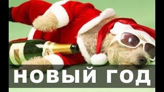 Новогодние приколы - Топ-30 веселый НОВЫЙ ГОД!