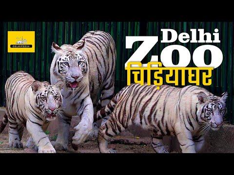 Delhi Zoo, Chidiya Ghar Or The National Zoological Park In Delhi