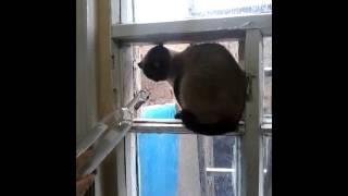 Кошка против бутылки