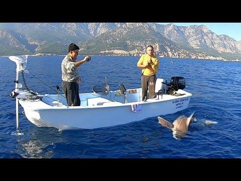 Canavar Köpek Balığı Antalya'da Yine Oltaya Yakalandı !!
