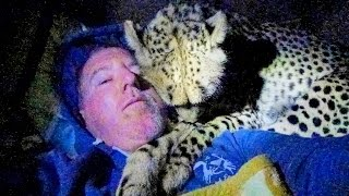 Night 4: Sleeping Inside A Cheetah Enclosure With Two Adult Big Cats - Cat Sleep Dreams Hunts Bye
