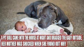 A Pit Bull Saved a Baby, but the Way It Did It Shocked the Mother