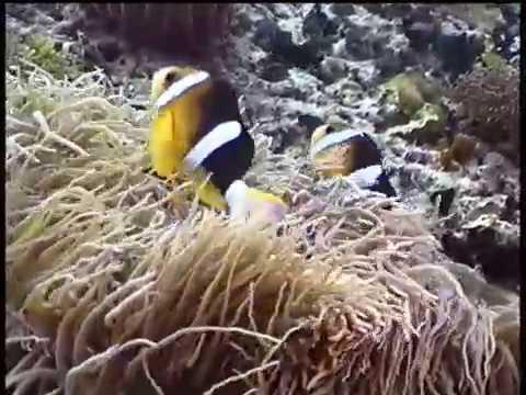 菲律賓 宿霧 莫亞礁