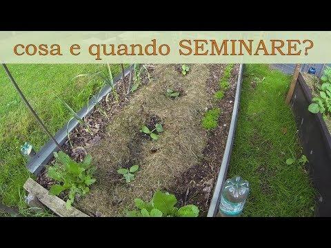 Consociazioni vegetali e costruzione del terreno (panoramica e riflessioni)