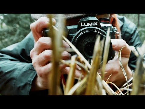 panasonic-lumix-g9-(pre-production)-first-use!-►-wandering-around-the-woods-and-shooting-in-the-rain