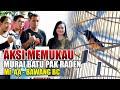 Aksi Memukau Murai Batu Pak Raden Mr Aa Bawang Bc  Mp3 - Mp4 Download