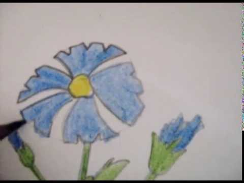 барвінок квітка фото