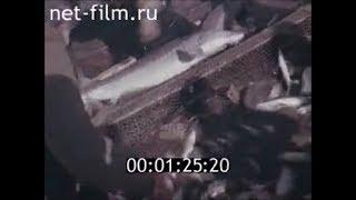 Рыбаки сибири, 1973 год. Докфильм СССР