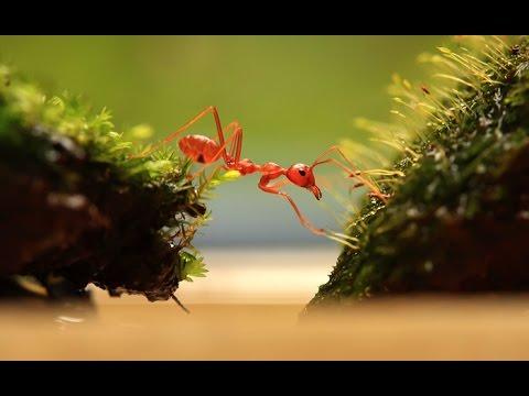 Film Pesona Dunia Semut