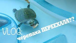 VLOG: черепаха Пиратка переехала! Новый ТЕРРАРИУМ!