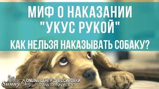 Как наказать собаку? Укусить собаку рукой - это правильно? Цезарь Милан и его методы дрессировки