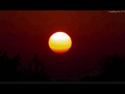Pt 2 Safari Live's Sunset Safari Drive at 5:30 AM on March 31, 2017