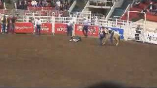 Kids Wild Horse Races