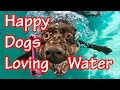 Happy Dogs Loving water