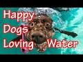 Happy Dogs Loving water