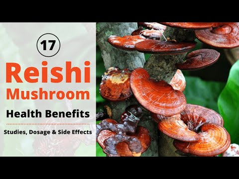 17 Reishi Mushroom Benefits | Studies, Dosage & Side Effects