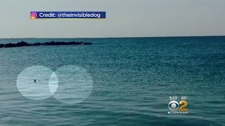 Coney Island Shark Sighting