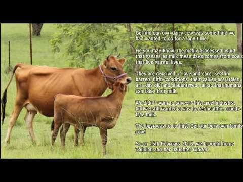 the-family-cow