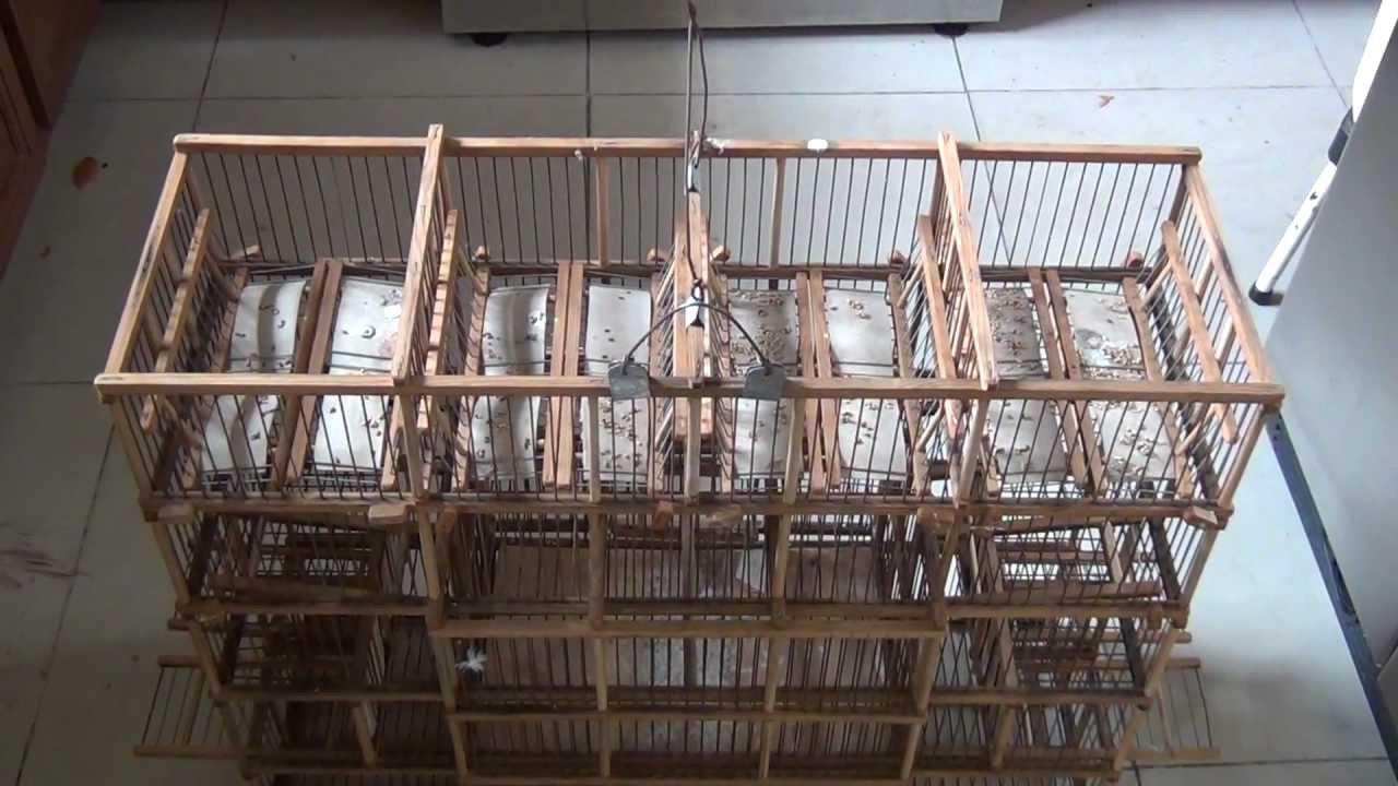 Jaula trampa para cazar silvestres youtube for Jaulas para cria de peces