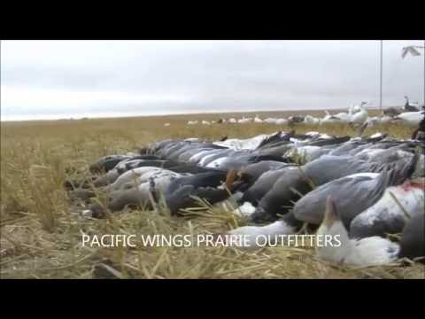 FOGGY DAY SNOW HUNT WITH PACIFIC WINGS 100 BIRD DAY!